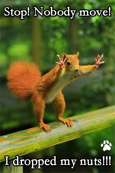 Squirrel Dropped My Nuts Funny Joke Pictures