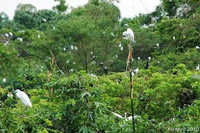 Sóc Trăng có gì đẹp - Vườn Cò Tân Long