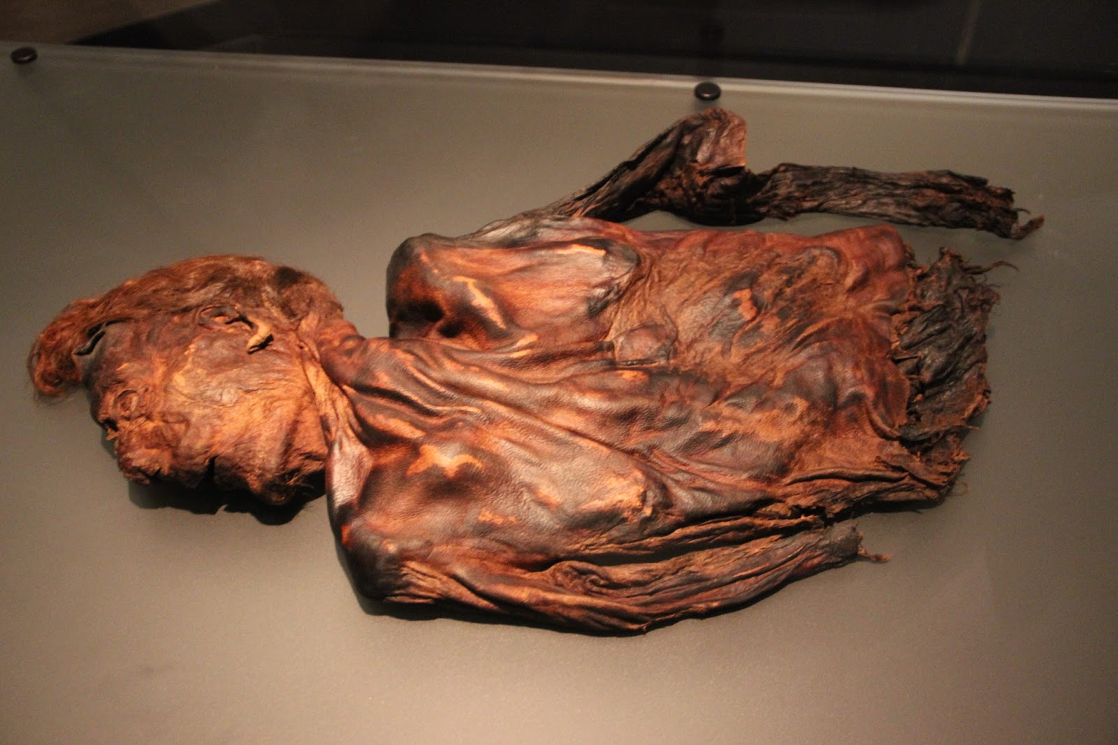 bog bodies When most of us think of bog bodies, we think of northwestern europe—ireland, say, or denmark but north america has its peat bogs, too, and some of them contain the remarkably well-preserved remains of ancient people one site in particular stands out as america's premier bog-body site: windover.