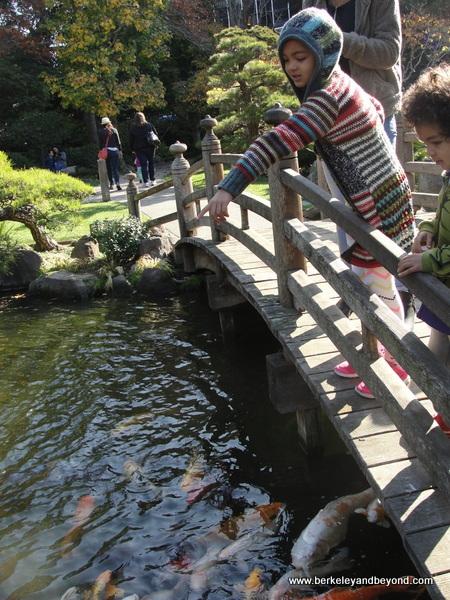 koi pond in Japanese Garden in Central Park in San Mateo, California