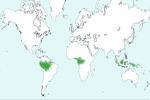 Mapa de distribución del clima ecuatorial en el mundo