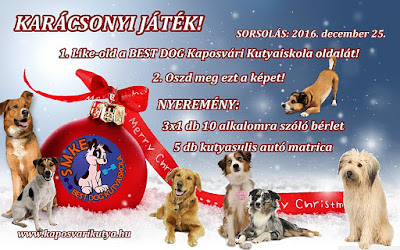 https://www.facebook.com/BestDogKaposvariKutyaiskola/photos/a.525231890842983.129077.522720957760743/1375737865792377/?type=3&theater