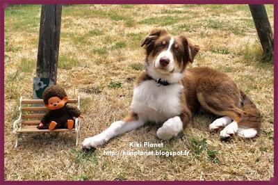 kiki monchhichi dressage berger australien, australian shepherd, vintage, toys life