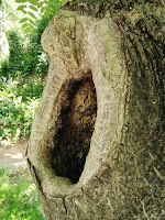 Hendidura en el tronco de un árbol.