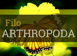 artrópodes resumo características classificação exemplos