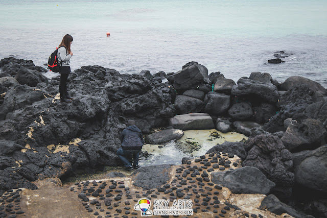 The stones at the Aewol Coastal beach area are black in color