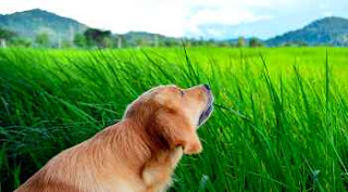 Dogs Eat Grass & How To Prevent It