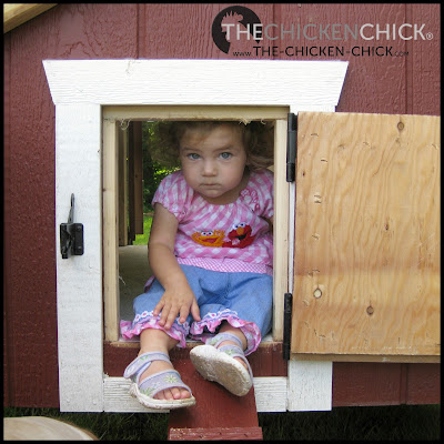 Raising chickens is a lot like raising toddlers in many ways- we must be vigilant constantly about things within their reach that may end up in their mouths.