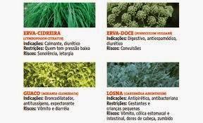 Plantas Medicinais2