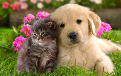 https://2.bp.blogspot.com/-M6yI9K03wWc/VOAV4UibenI/AAAAAAAAAAs/8dF6sXYK5So/w426-h266-p/perritos-bonitos-de-cachorros-tiernos-en-excelente-calidad-213792.jpg