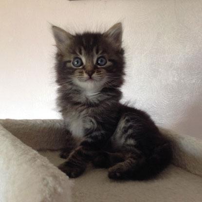 Cats Protection tabby kitten