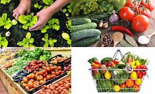 Yeni İş Fikirleri Organik Gıda İşine Başlamak