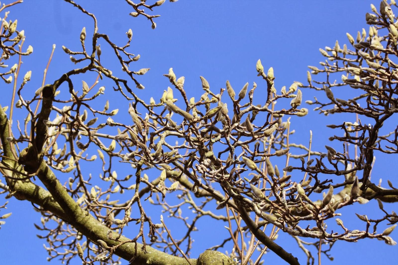 Garden-tree-spring-365