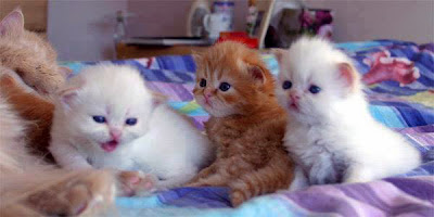 cat family nice photo