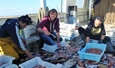 Pescaturismo Mallorca Los turistas disfrutan seleccionando el pescado durante la excursión