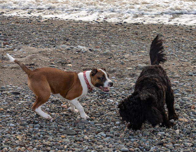 Photo of Ruby and Sid playing on the beach