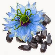 el aceite de semilla negro puede curar la impotencia