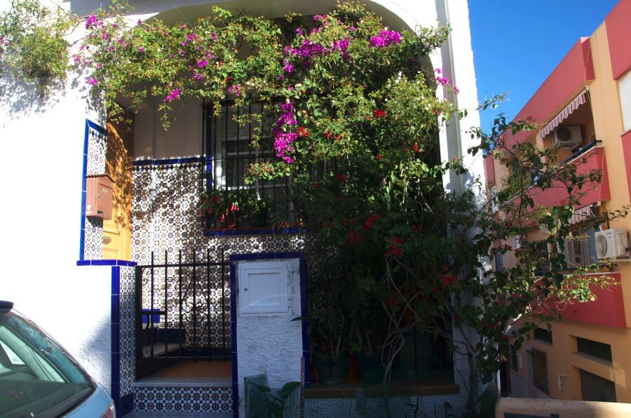 Цветы на улице города