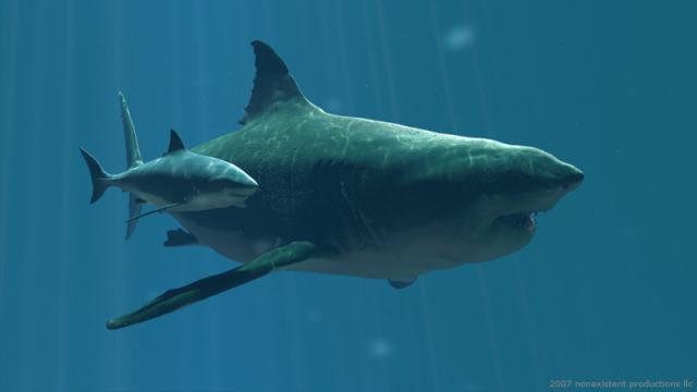 Megalodon ikan hiu paling buas dan paling besar serta paling mengerikan di dunia
