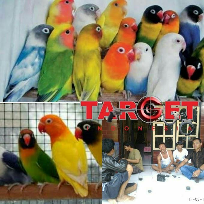 Berawal Dari Hobi Dan Pecinta Burung Lovebird Mampu Menjadikan Nilai Ekonomis Tinggi