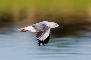 Starting out with Birds in Flight Photography