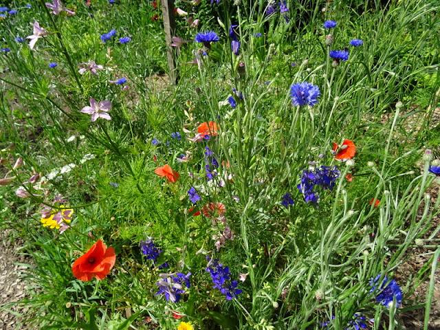 Majorahn - Ein Garten In Rheinhessen: Gutes Brot - Nicht Nur In ... Wie Man Einen Gesunden Gemuse Garten Plant Und Aufrechterhalt