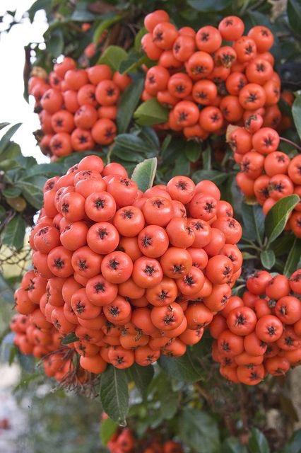 Frutas Tropicais