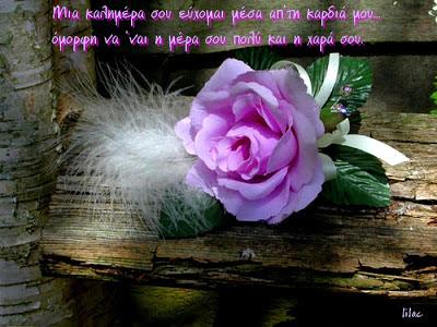 loyloydi-τριαντάφυλλο-rose-logia sofa-καλημέρα