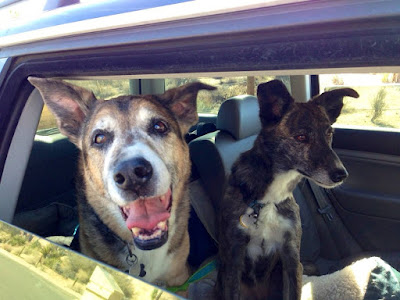 dogs, roadtrip, cars,