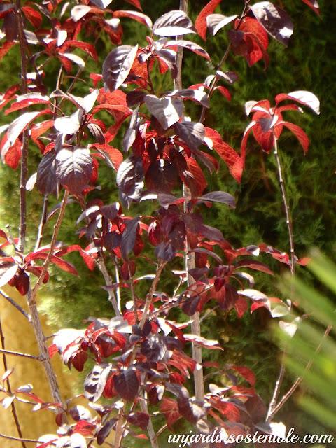 Arbol Decorativo Jardin Peque Ef Bf Bdo