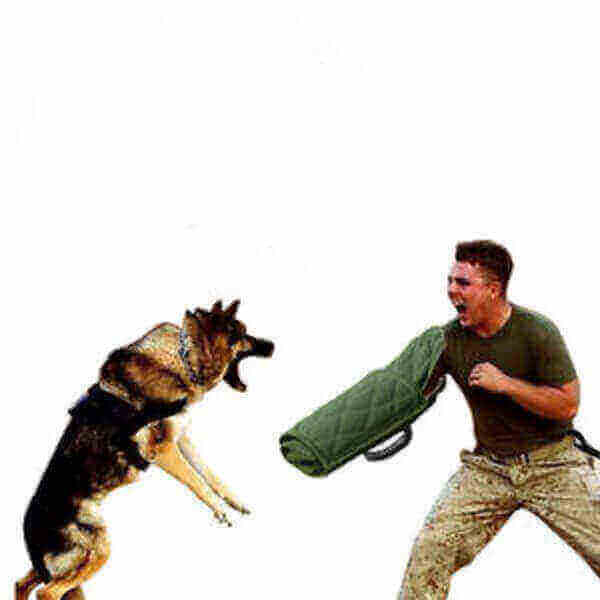 training dog