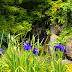 菖蒲も紫陽花も百合も自然も @福智山ろく花公園