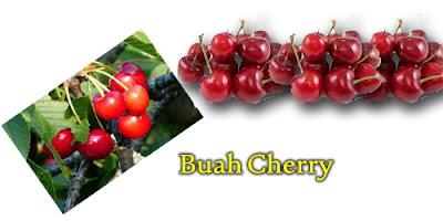 Cara menanam beach cherry dari biji, cara menanam buah cherry dari biji, manfaat buah cherry bagi kesehatan, budidaya buah cherry yang baik dan benar, Tanaman Buah, Cara menanam biji buah cherry,