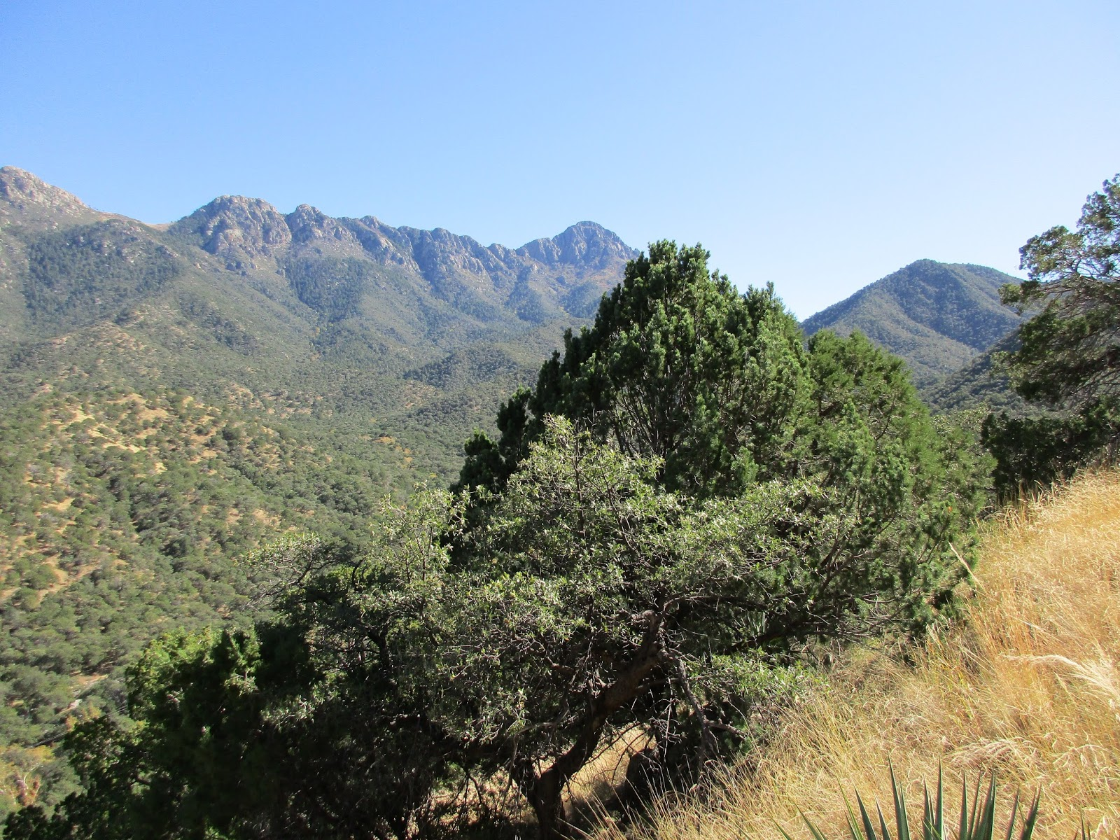 Santa Rita Mountains : Climbing, Hiking & Mountaineering ...