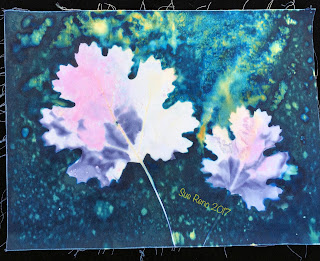 Wet Cyanotype_Sue Reno_Image 165