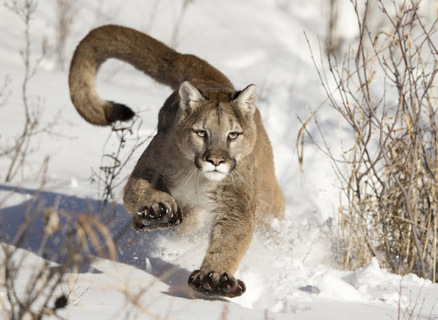 HD Images of the Wild Animals, Wallpapers and backgrounds