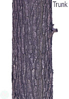 trunk, tree trunk