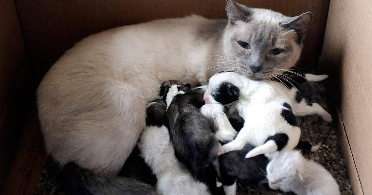 Dunia Haiwan Sains Tahun 2  Haiwan yang melahirkan anak