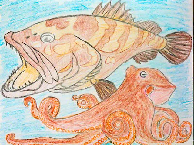 grouper, fish, octopus, sketch