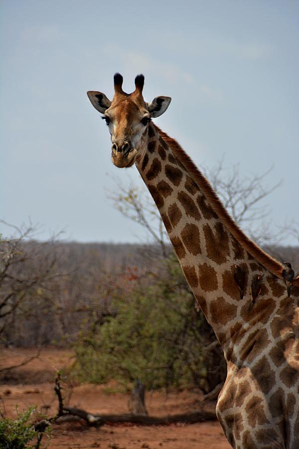 best moment Platz 1. safari