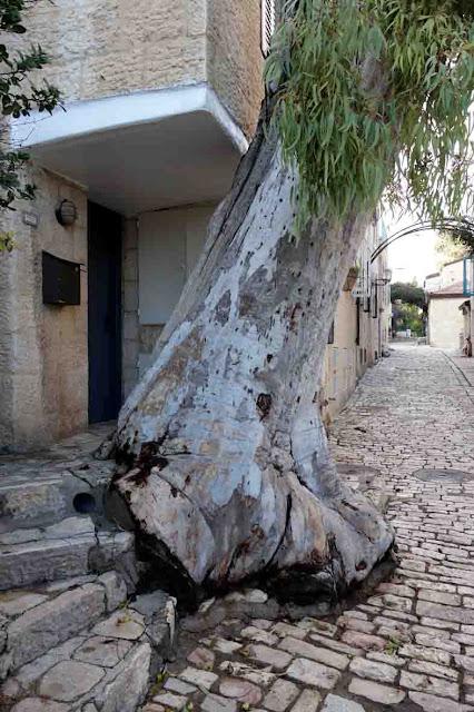 Un arbre dans la ville -  Quartier Yemin Moshe