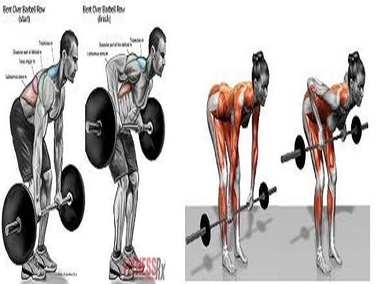 How to Barbell Row And Benefits: Your Guide to the Proper Form