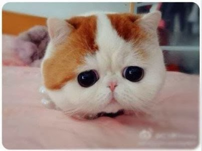 Snoopybabe Kucing yang Punya Mata Bulat Lucu