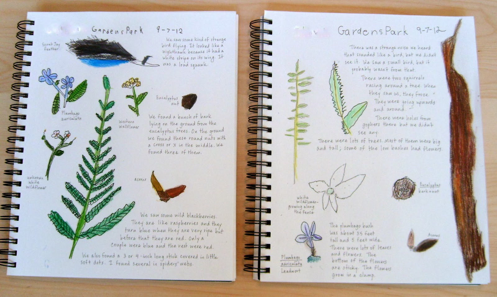 nature journals living lessons outing recent