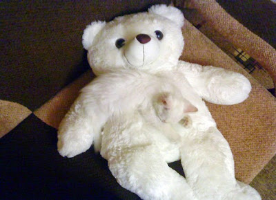 Gato camuflado con un oso