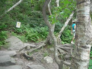 Hiking Trail to the Swinging Bridge Grandfather Mountain
