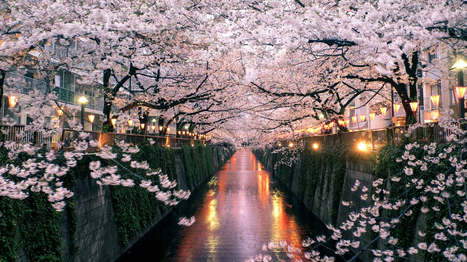 Cherry blossoms over the Meguro River, Tokyo, Japan © taketan/Getty Images