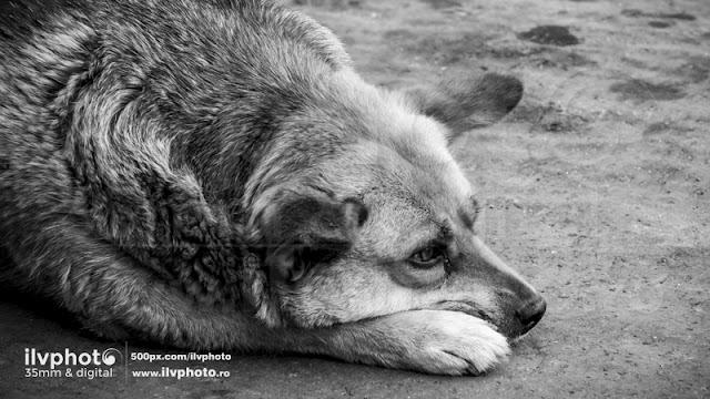 favorite dog 1 - ilvphoto