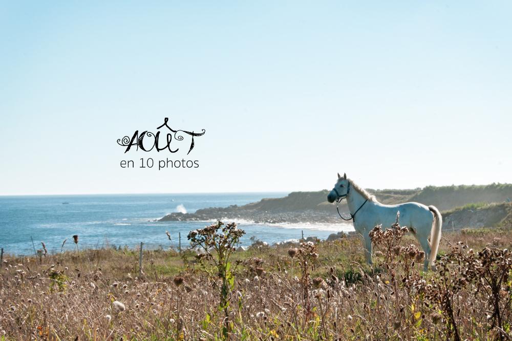 Cheval blanc regardant la mer sur l'île de Batz