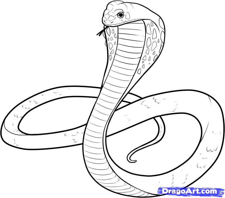 50 Free Printable SNAKE Coloring Pages Huge Collection  Animal